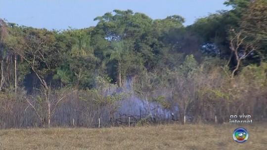 Incêndio de grandes proporções atinge área de vegetação em distrito de Rio Preto