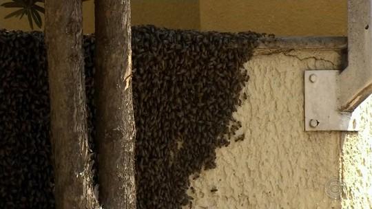 Calor espantou milhares de abelhas que se aglomeraram em muro de loja em Garça, diz bombeiro