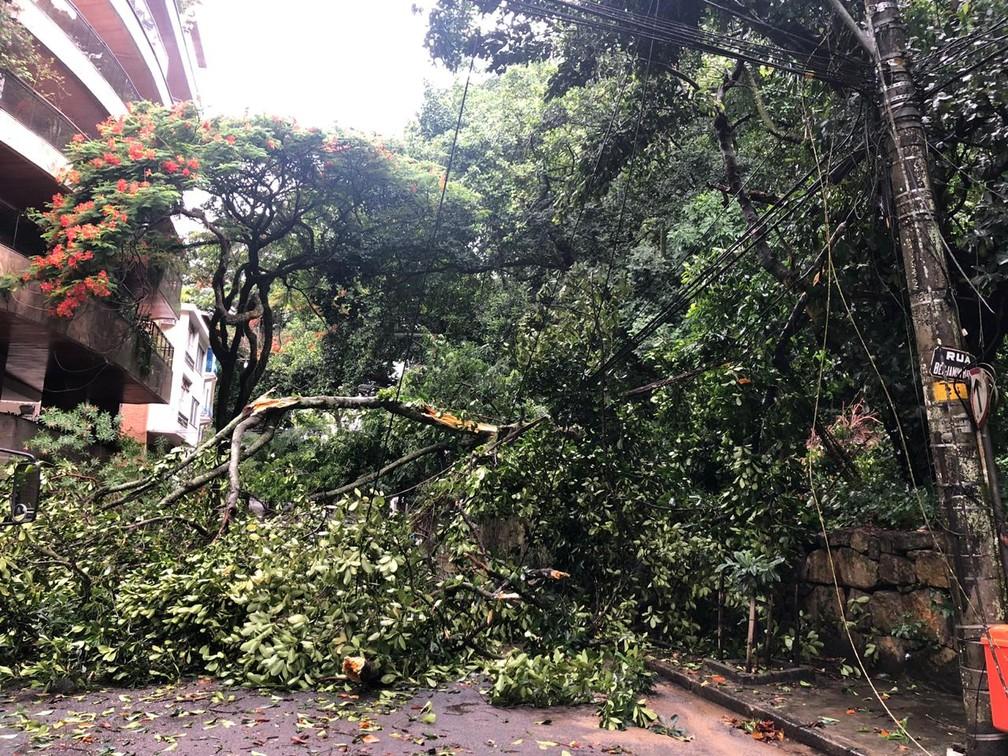 Árvore bloqueia a Rua Benjamin Batista, no Rio, ao lado do Parque Lage, no Jardim Botânico — Foto: TV Globo