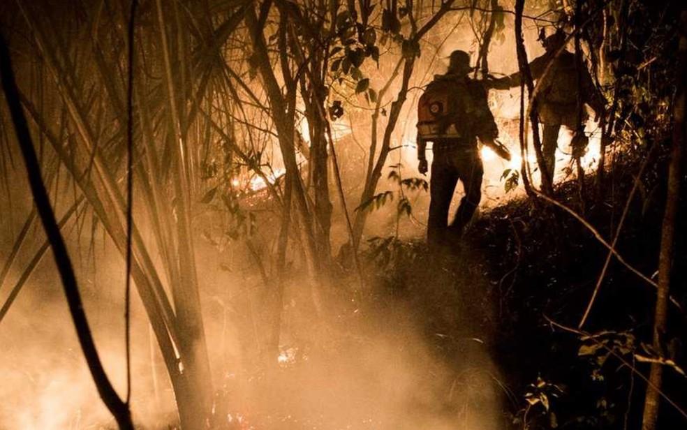 Foho já destruiu 26% da área do Parque Nacional da Chapada dos Veadeiros (Foto: Davi Boarato/BBC Brasil)