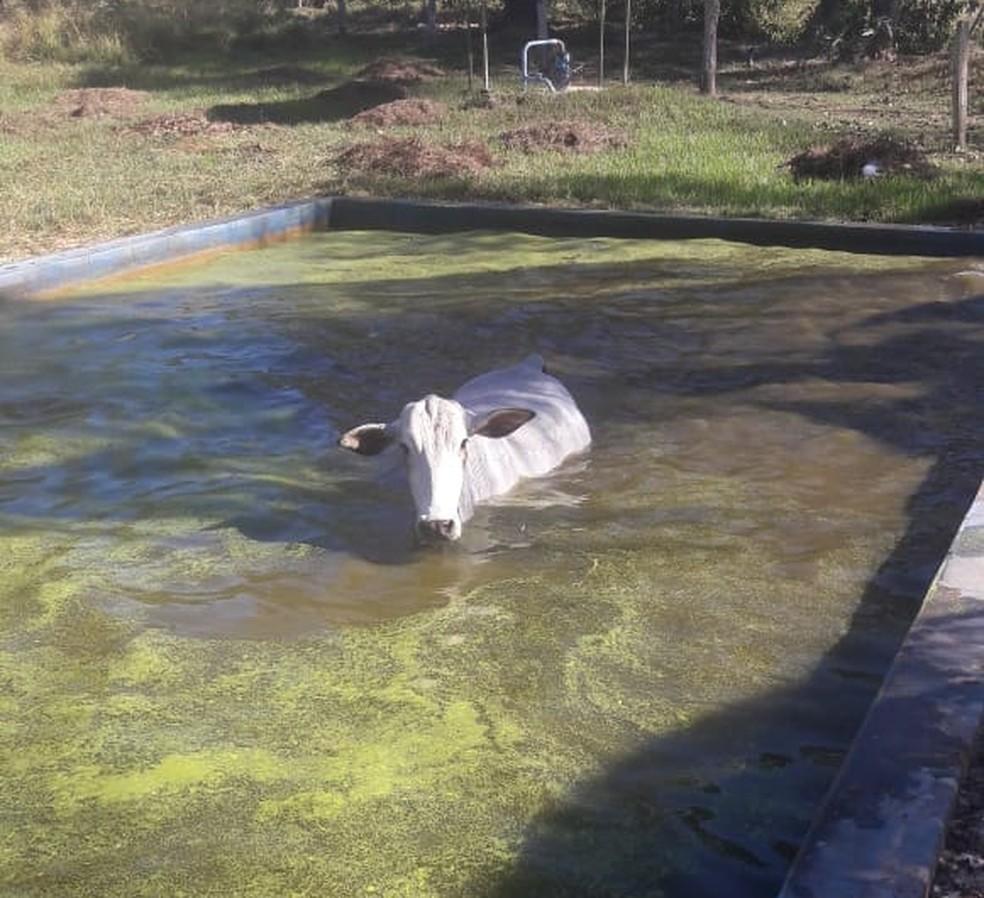 Animal se assustou com cachorros ao tentar beber água em piscina (Foto: Marcos Oliveira/Arquivo Pessoal)