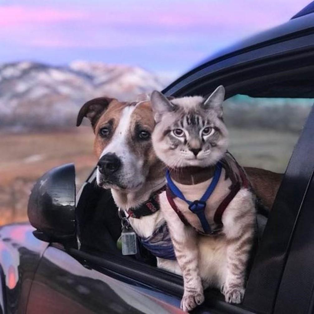 O gato Baloo, que veste uma guia nas caminhadas, gosta de explorar as paisagens tanto quanto o cachorro Henry (Foto: Cynthia Bennett)
