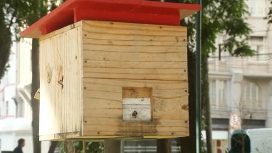 Projeto 'Jardins de Mel', em Curitiba, ajuda a preservar as abelhas sem ferrão e contribui com o meio ambiente