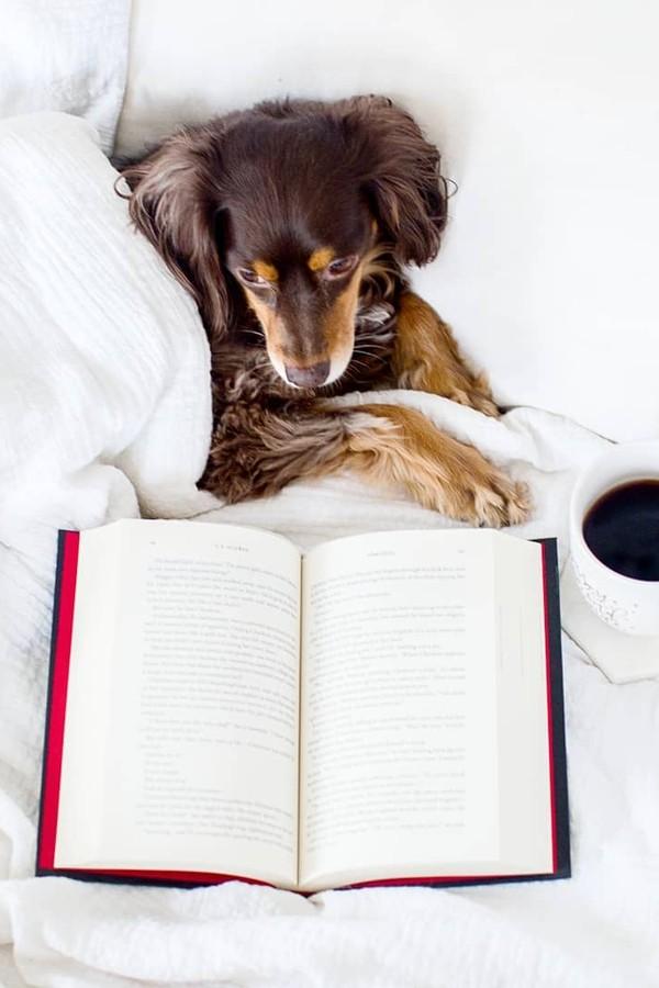 Sua meta é ler mais em 2019?  (Foto: @booksandacupofjoee)