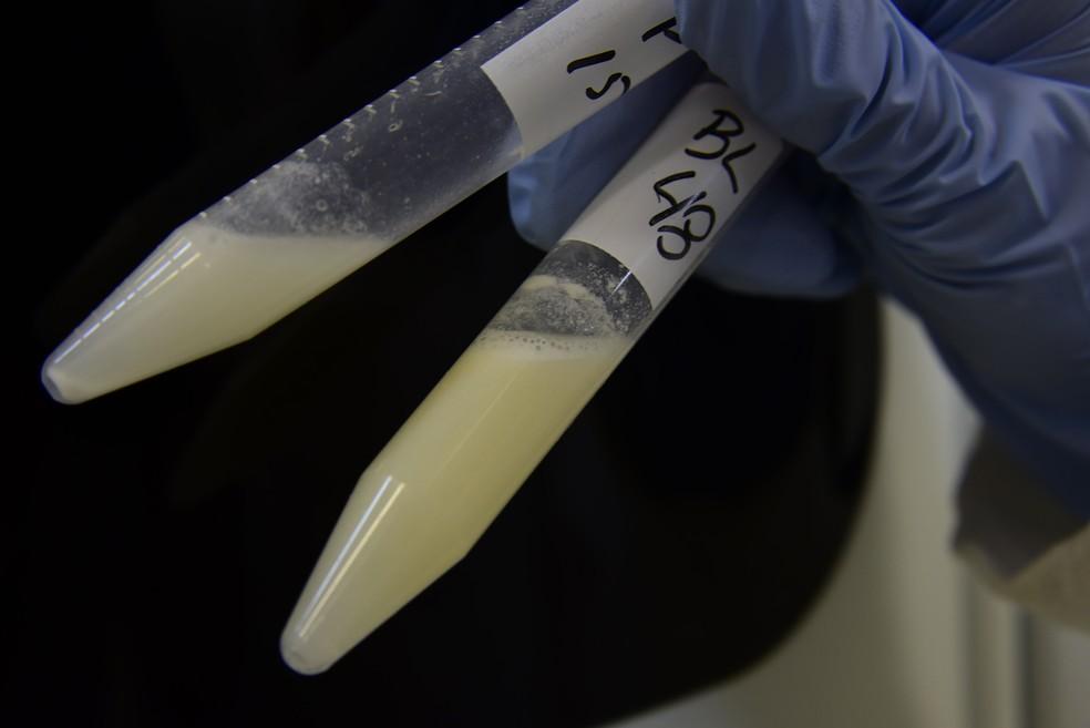 A composição e o metabolismo do leite materno foram analisados no estudo da Unicamp, em Campinas (Foto: Antonio Scarpinetti/Ascom/Unicamp)