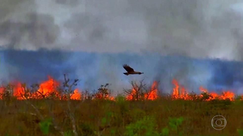 Queimadas no Pantanal em 2020 — Foto: Jornal Nacional/ Reprodução