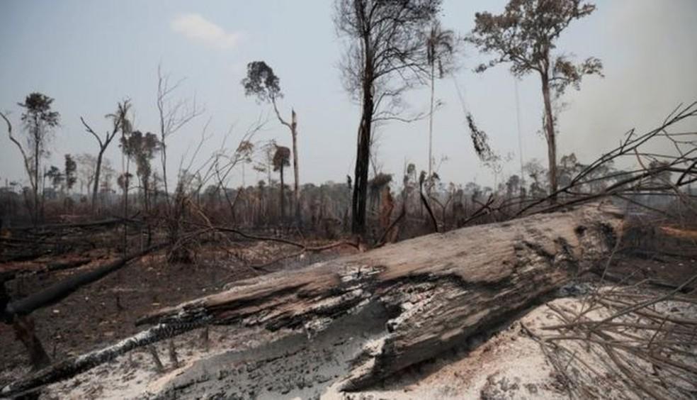 """Iniciativas de investidores para pedir a redução do desmatamento na Amazônia começam a dar resultados na esfera do discurso e criaram """"vontade política"""" em Brasília para proteger a floresta, avalia embaixador da UE no Brasil — Foto: Reuters"""