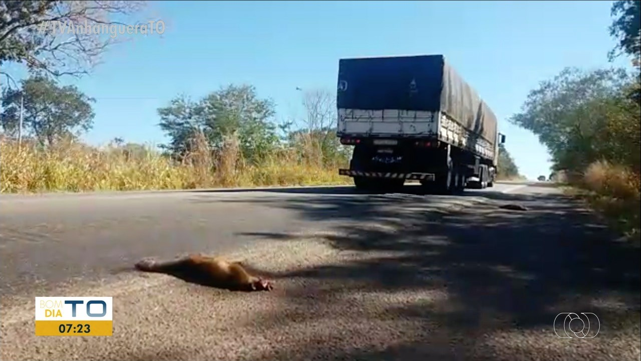 Morte de animais silvestres em rodovias aumenta durante período de queimadas - Notícias - Plantão Diário
