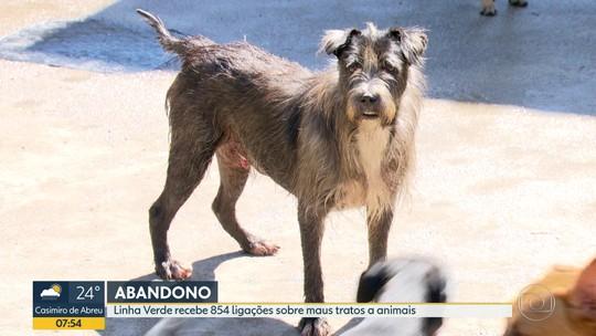 Linha Verde do Disque Denúncia recebe 854 denúncias de maus tratos contra animais no primeiro trimestre