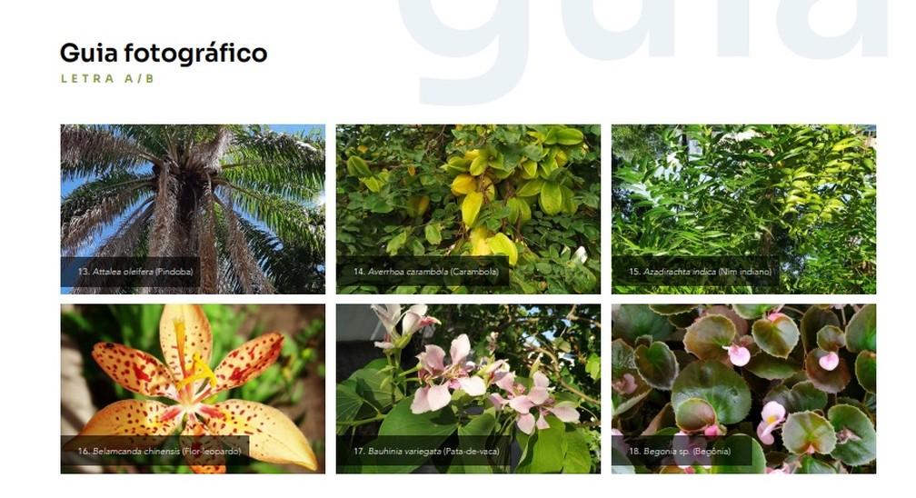 Guia fotográfico mostra as espécies de plantas em ordem alfabética — Foto: Reprodução/Guia de Vegetação de Praças Campos dos Goytacazes/ RJ- 2021