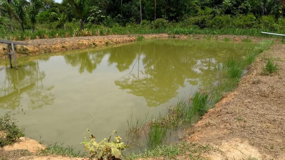 O local é de apenas um hectare, mas a produção é de quatro a cinco mil peixes por ano (Foto: Hosana Morais/G1)