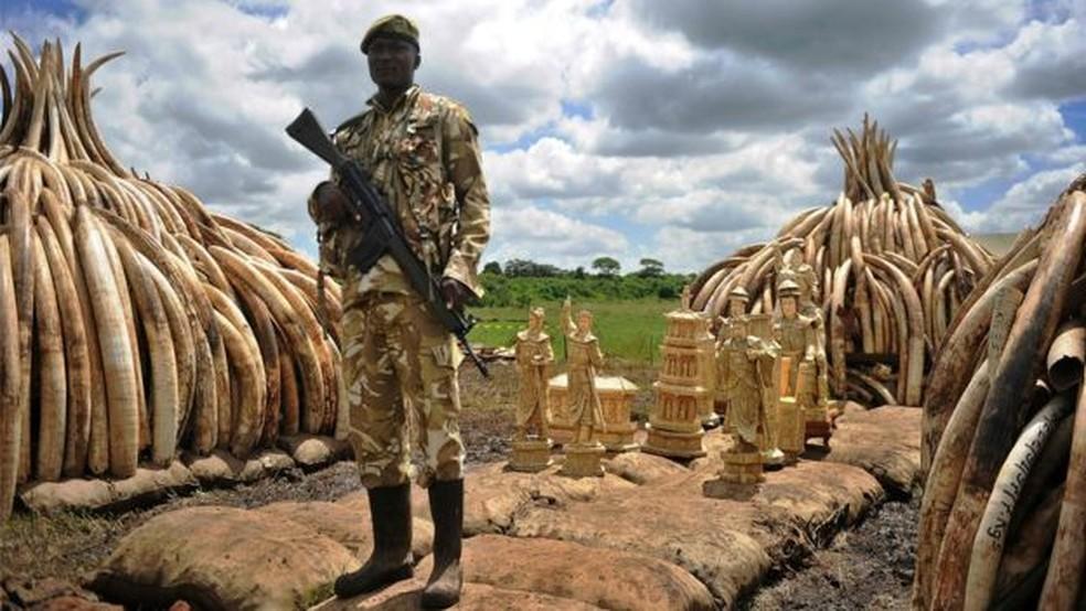 Caça de rinocerontes pode voltar a ser liberada após 25 anos — Foto: AFP