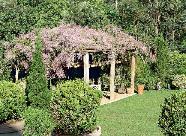 Foi em homenagem a Burle Marx que o paisagista Roberto Riscala escolheu a congeia para cobrir a pérgola de eucalipto neste jardim em Itu, interior de São Paulo. O efeito deslumbrante dura por aproximadamente quatro meses, do início do inverno à primavera (Foto: Divulgação)