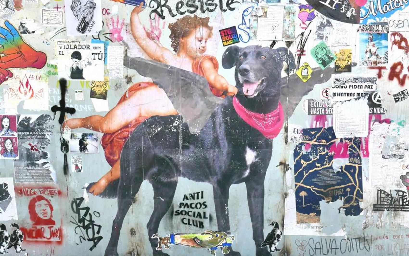 Cachorro vira-lata se torna símbolo de manifestações no Chile