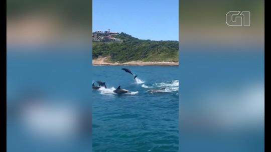 Golfinhos deixam turistas encantados em Armação dos Búzios, no RJ; veja vídeo
