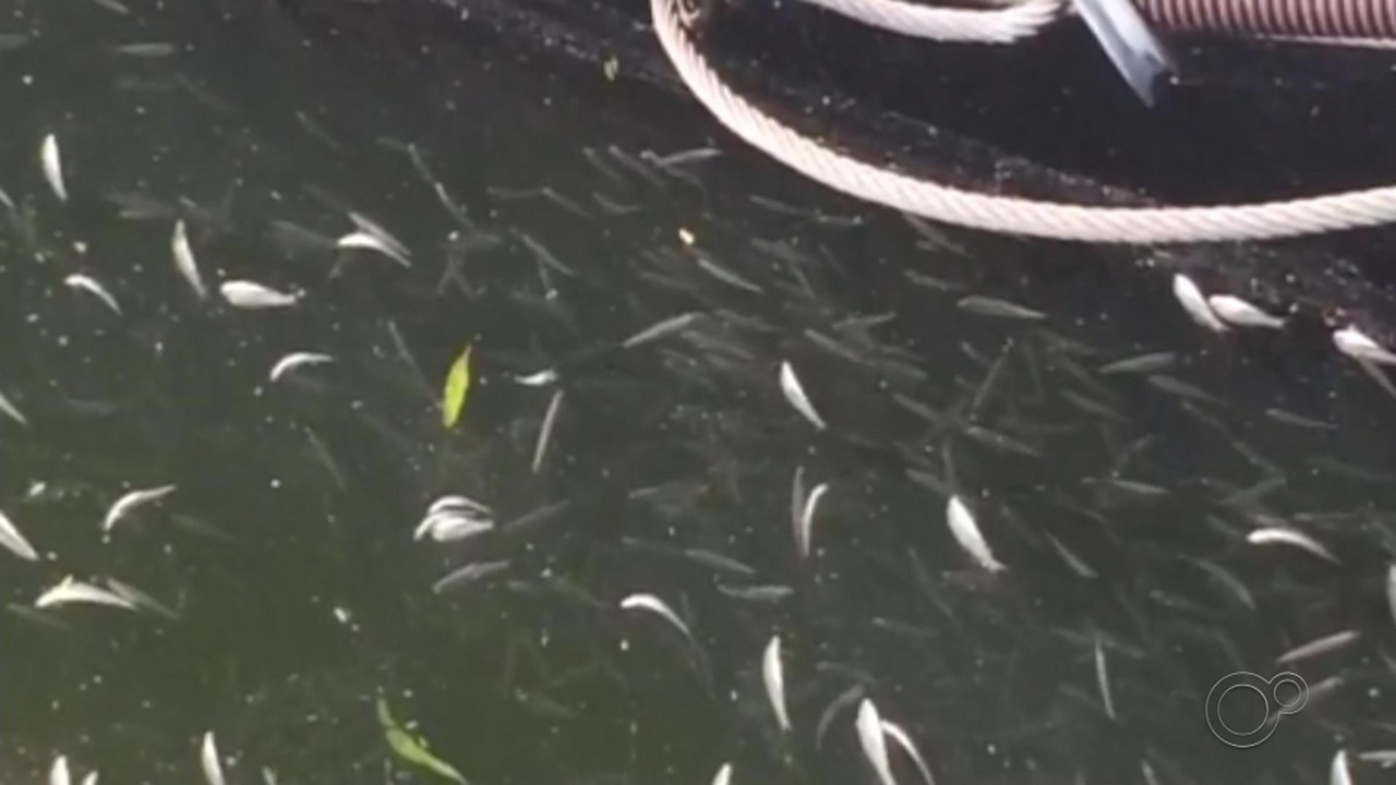 Moradores flagram peixes mortos na orla turística do Rio Tietê em Barra Bonita