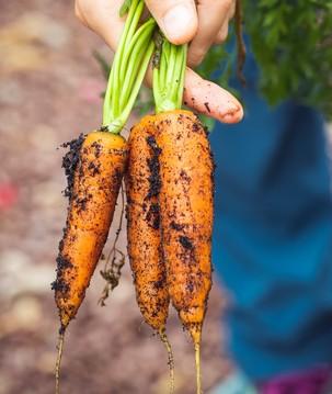 Como aumentar a produção de alimentos sem prejudicar a natureza e a saúde?