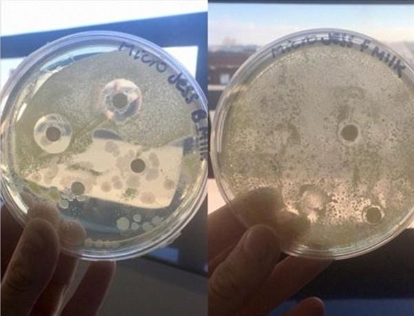Leite materno combate bactérias (Foto: Reprodução/Facebook)