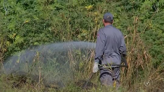 Bombeiros registram 40 queimadas em um dia na região de Itapetininga