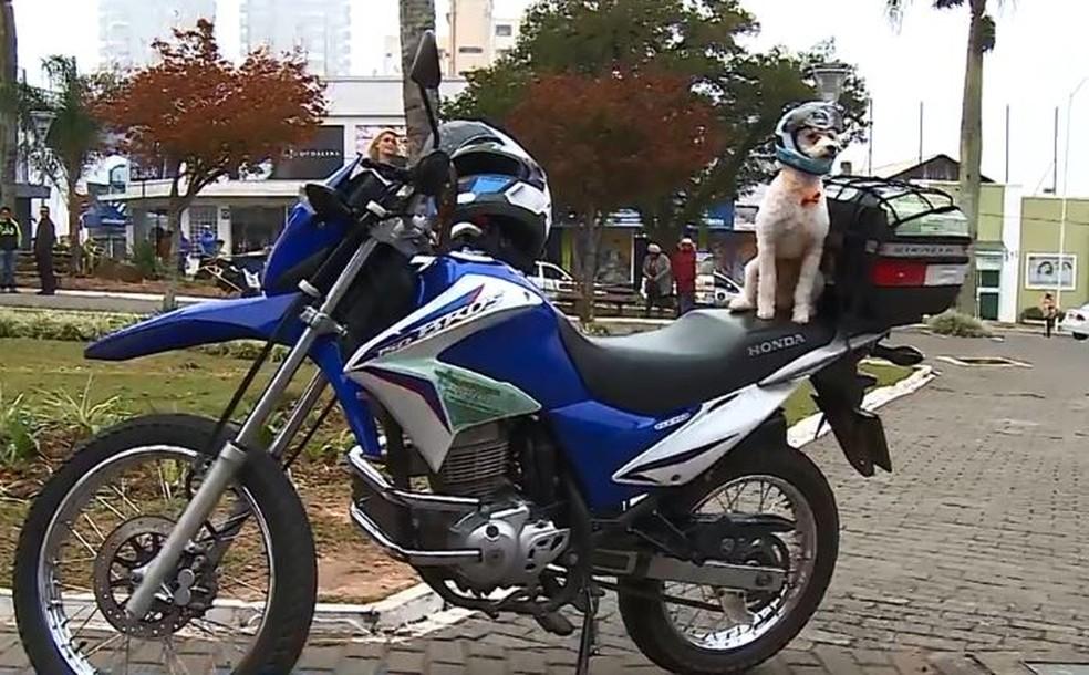 Biscoito usa capacete e chama a atenção em Lages, na Serra catarinense.  — Foto: Reprodução/NSC TV