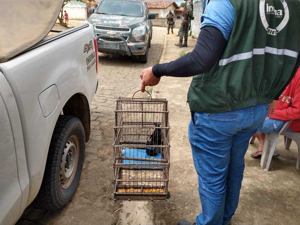 Animais foram apreendidos durante operação no sudoeste da BA — Foto: CIPPA Porto Seguro