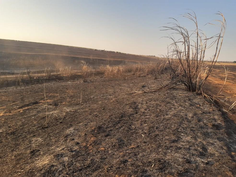 Fazenda foi autuada em Queiroz (SP) em mais de R$ 111 mil por degradação ambiental — Foto: Polícia Ambiental/ Divulgação