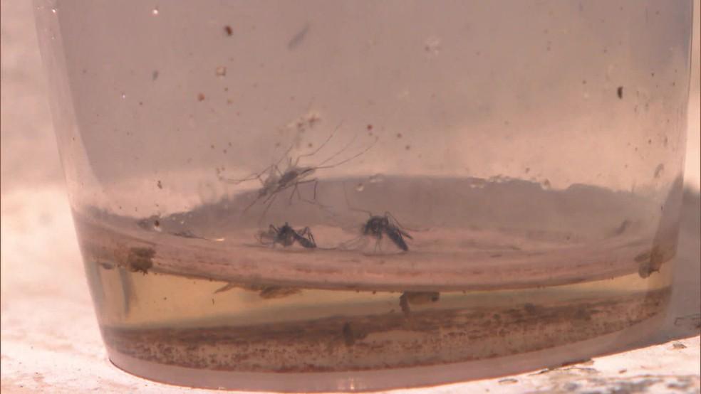 Mutirão vai promover de 2 a 7 de dezembro ações de combate ao mosquito Aedes aegypti — Foto: Reprodução/TV Globo