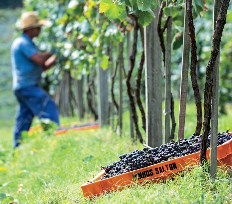 Vinhos (Foto:  )