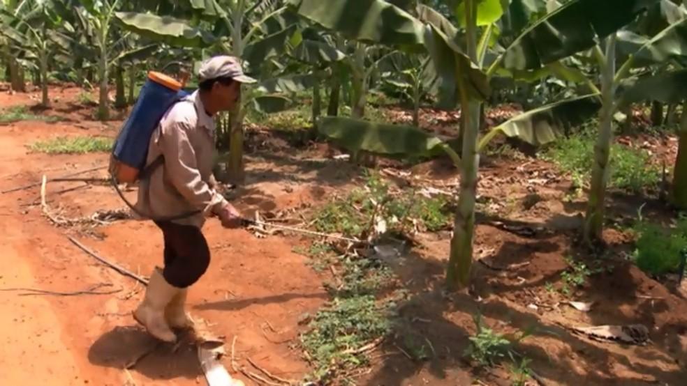 Índice de câncer em Limoeiro do Norte é 38% maior que nas demais cidades devido ao uso abusivo de agrotóxicos (Foto: TV Verdes Mares/Reprodução)