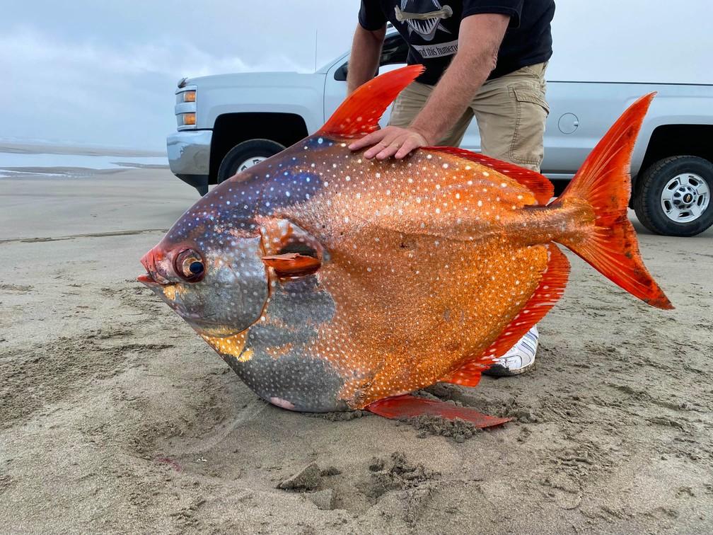 Pesquisador do aquário de Seaside, em Oregon, nos EUA, segura peixe-lua encontrado morto em praia. Foto de 14 de julho de 2021 — Foto: Seaside Aquarium