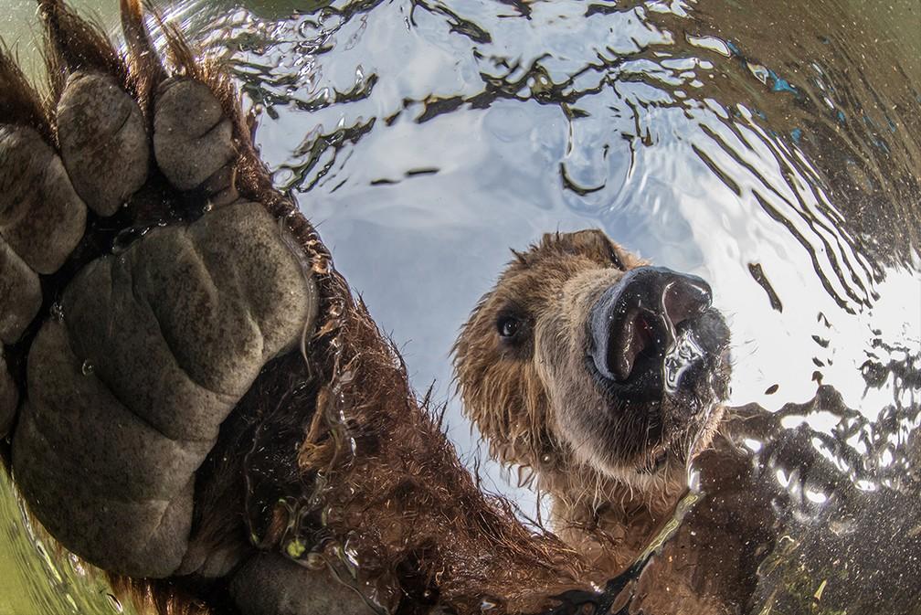 Imagem de urso nadando na Rússia venceu a categoria Vida Terrestre — Foto: Mike Korostelev