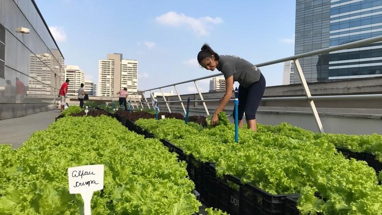 Horta da Plant no alto de uma torre em São Paulo (Foto: Divulgação)