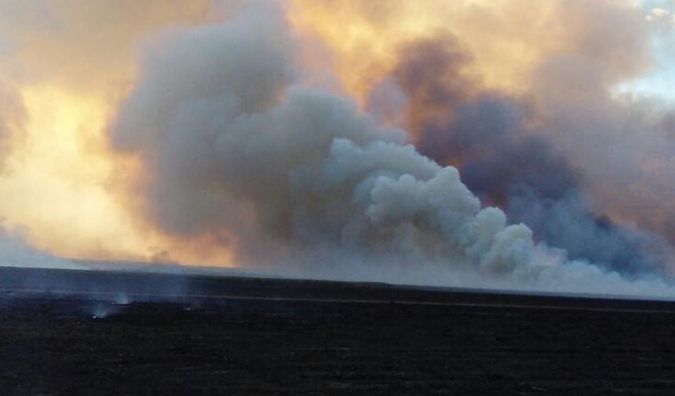 Pastos e lavouras foram atingidas pelas chamas (Foto: Divulgação)