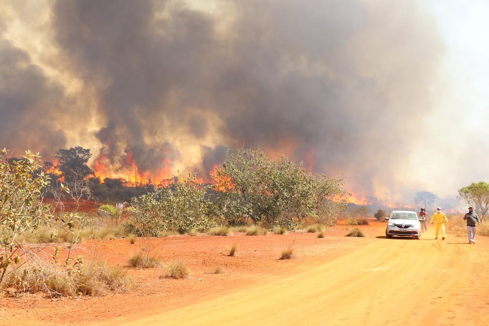 Incêndio no Parque Estadual do Juquery, em Franco da Rocha, na Grande SP — Foto: Divulgação/Secretaria Estadual de Infraestrutura e Meio Ambiente