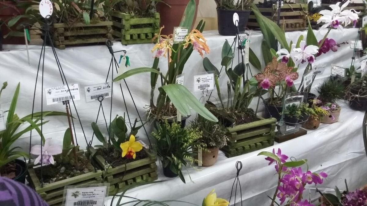 27º Furusato Matsuri celebra a gratidão ao solo do Cocuera