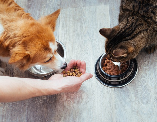 owner pours dry food to the cat and dog in the kitchen. Master's hand. Close-up. Concept dry food for animals (Foto: Getty Images/iStockphoto)