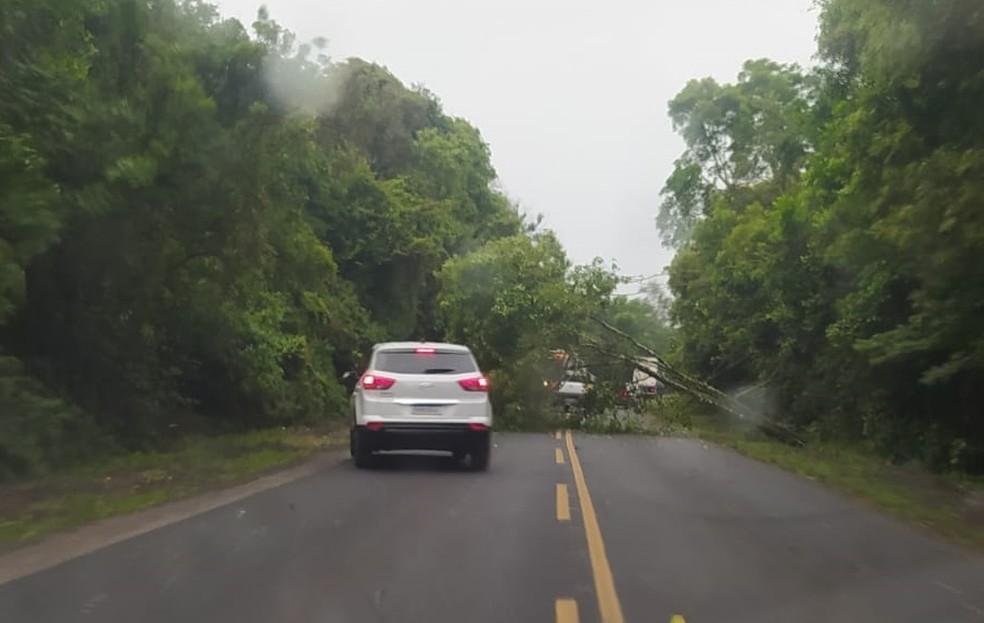 Na PR-151, em Ponta Grossa, árvore bloqueou rodovia — Foto: Foto cedida/Arquivo Pessoal
