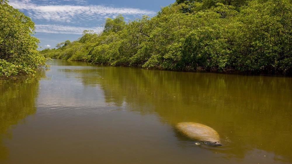 Peixes-bois marinhos são transferidos de PE para readaptação em APA na Paraíba