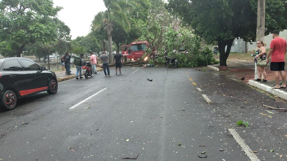 Árvore caiu e deixou motociclista gravemente ferido em Araçatuba — Foto: Arquivo pessoal