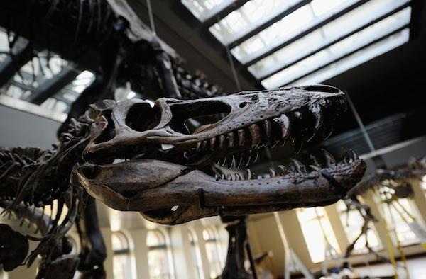 O ator Nicolas Cage comprou um esqueleto de dinossauro (Foto: Getty Images)