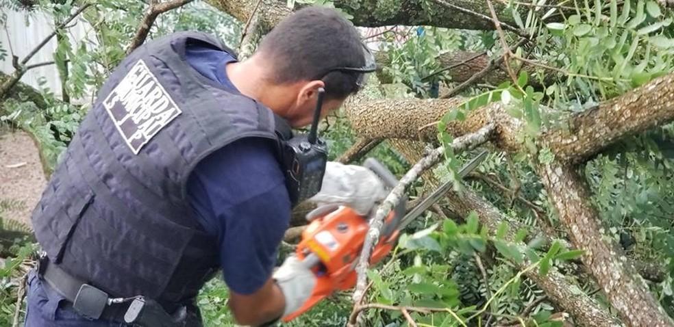 Temporal causou quedas de árvores em São José dos Pinhais, na tarde deste domingo (24) — Foto: Divulgação/Guarda Municipal de São José dos Pinhais
