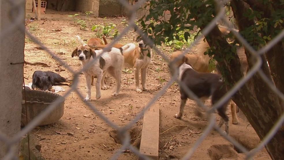 Mais de 80 animais estão no local — Foto: Witter Veloso/TV TEM