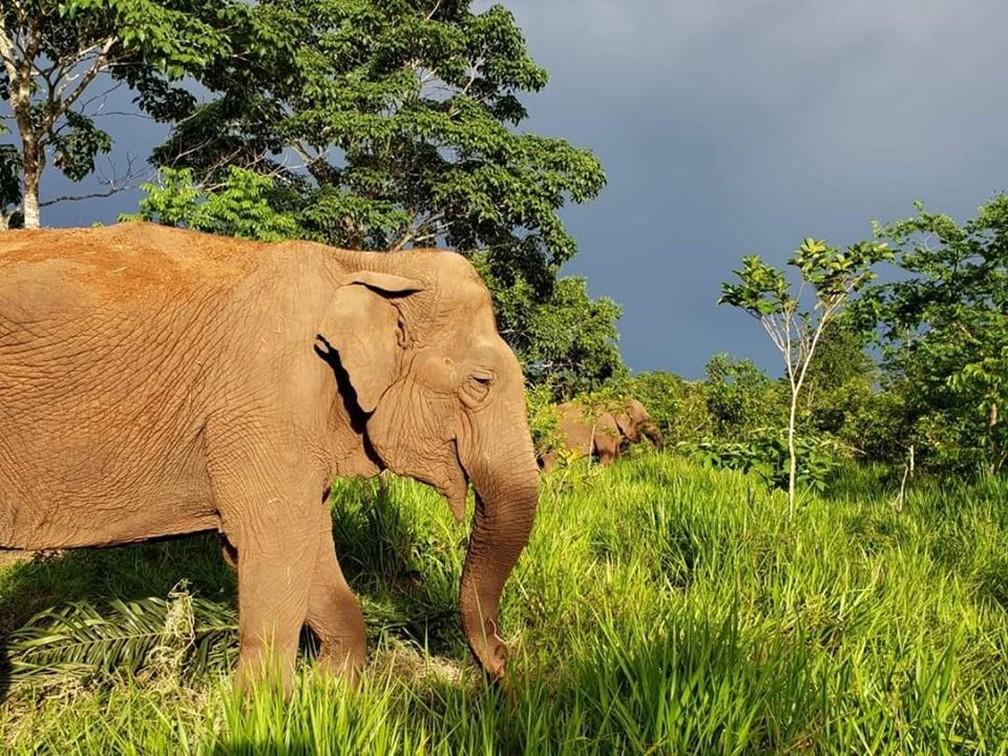 Rana e Ramba são companheiras no santuário — Foto: Santuário dos Elefantes/Divulgação