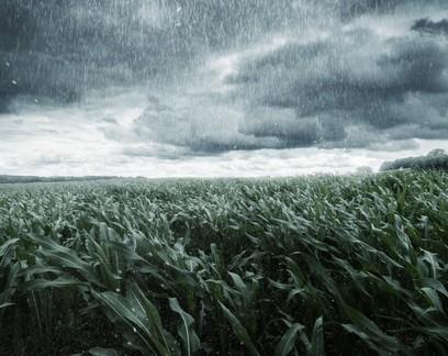 Semana será de chuvas irregulares nas regiões produtoras do país