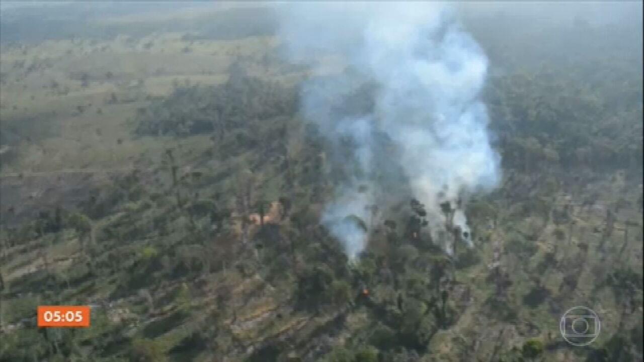 Desmatamento na Amazônia é o maior dos últimos 10 anos, diz estudo