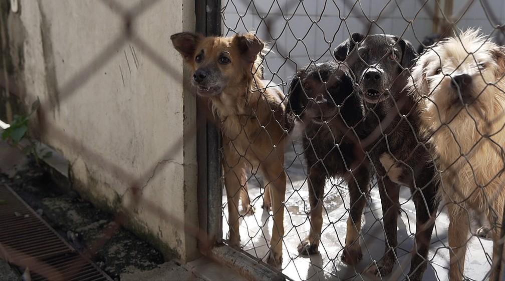 Suipa recebe denúncias de maus-tratos aos animais — Foto: Marcos Serra Lima/G1