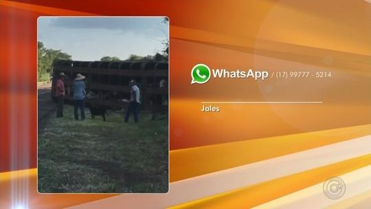 Carreta que transportava gado se envolve em acidente em rodovia de Jales