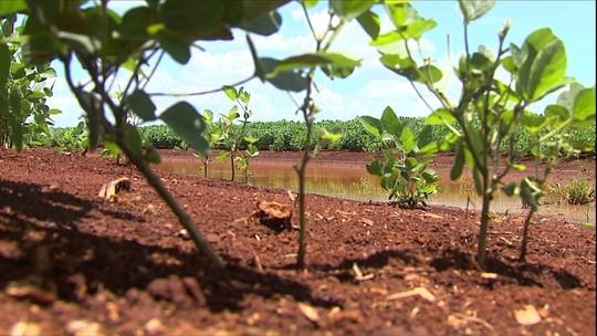 Produção de soja no Paraná espera boa safra após problemas no plantio