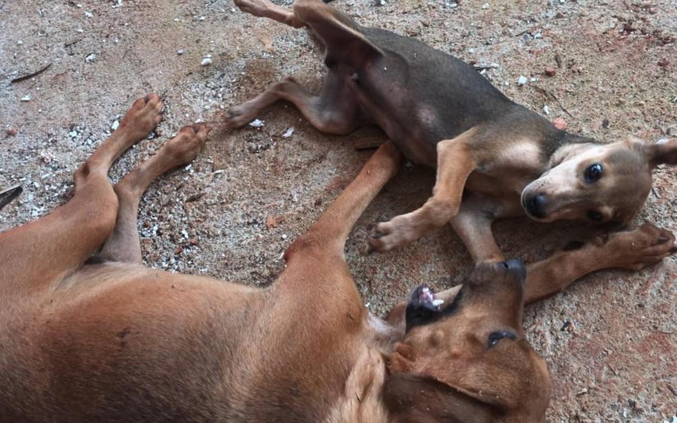 Suspeita de morador é que animais de rua tenham sido envenenados, em Goiânia — Foto: Reprodução/Jairo Alves Neves