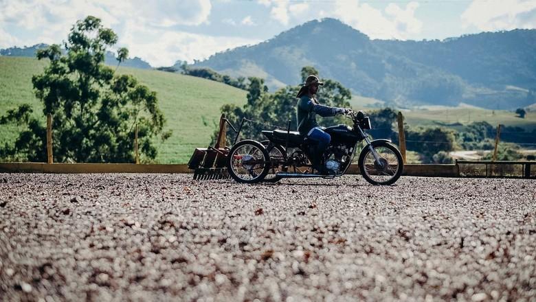 Terreiro de Café da Fazenda IP sendo organizado por equipamento montado em moto  (Foto: Selva Bizarria)